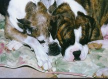 Boxer Rescue of Virginia memorial photo: Mimsy