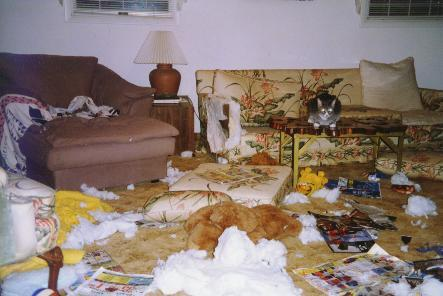 Boxer Rescue of Virginia - photo of destruction to home caused by untrained boxers